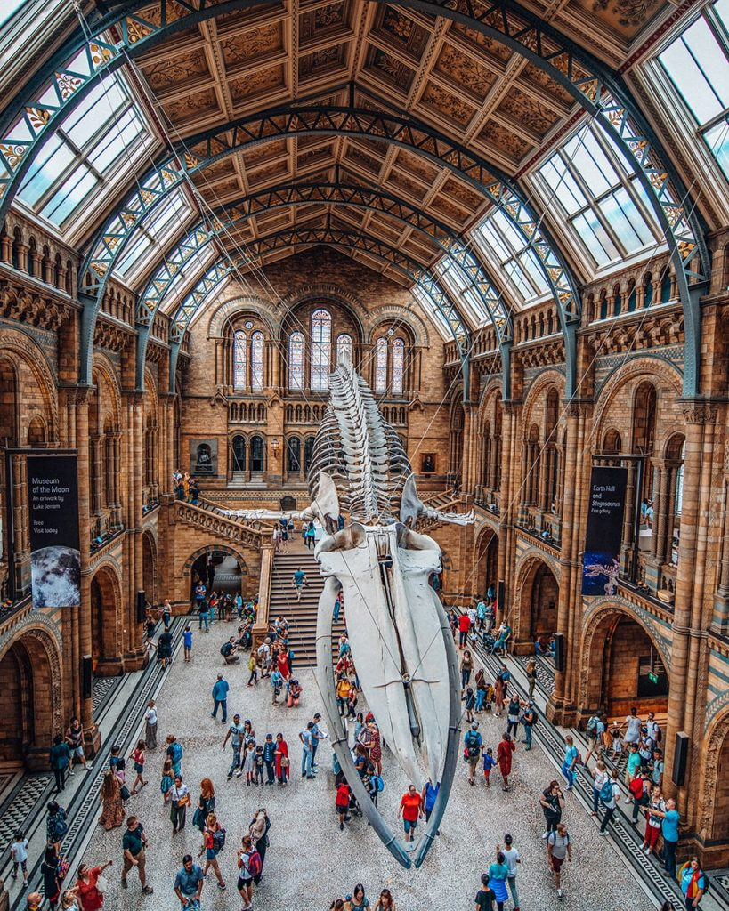 natural history museum in the uk