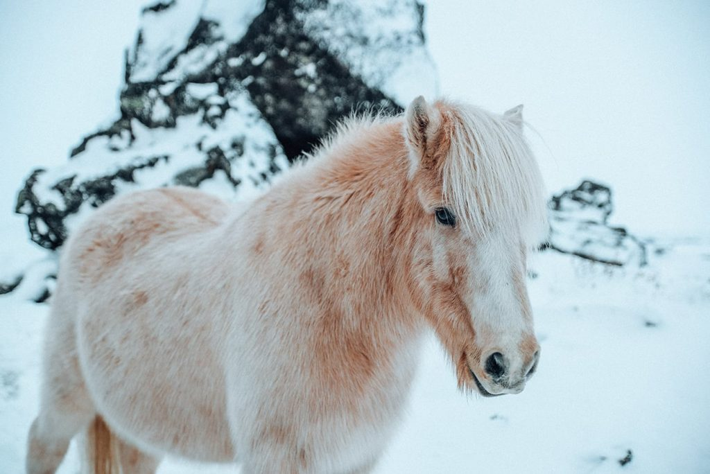 a pony in the snow
