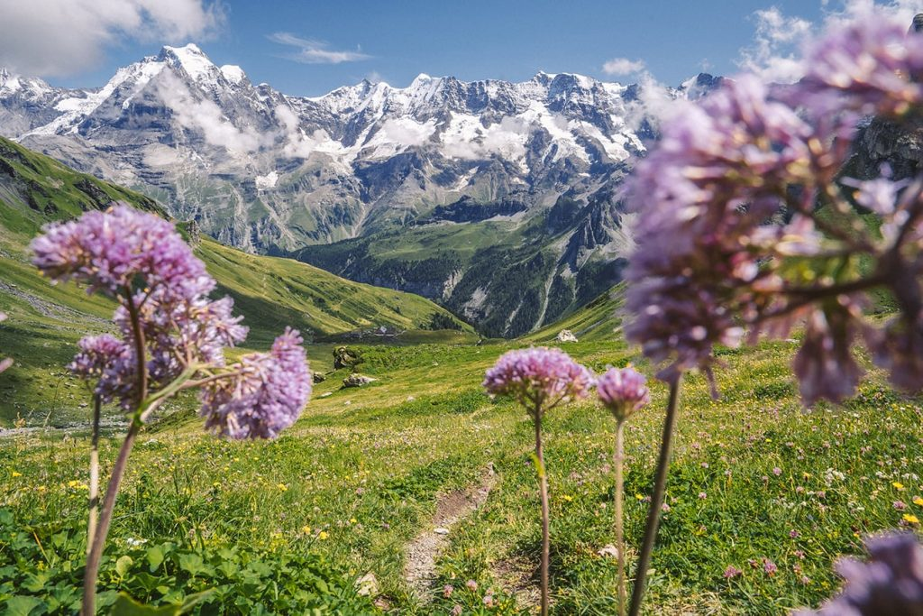 the mountains and flowers of lauterbrunnen switzerland