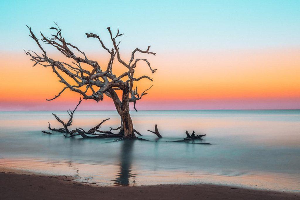 A Tree in Jekyll Island in Georgia, USA