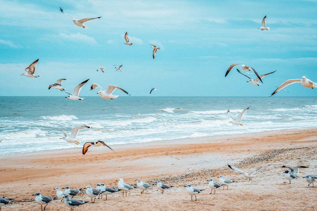 Birds Flying Along the Coastline of Amelia Island, Florida